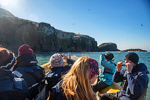 Team of RSPB volunteers approach Grassholm Island. Wales, UK. October - Sam Hobson