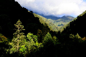 Mountain forests where the Yunnan snub-nosed monkey  (Rhinopithecus bieti) lives, Yunnan, China. - Enrique Lopez-Tapia