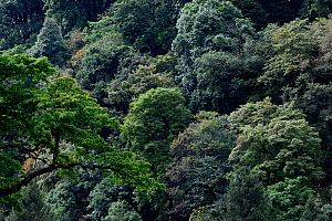 Mountain forests where the Black yunnan snub-nosed monkey   (Rhinopithecus bieti) lives. Yunnan Snub-Nosed Monkey National Park, Yunnan, China. - Enrique Lopez-Tapia
