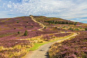 Offa's Dyke path leading to the summit of Moel Famau in the Clwydian Mountain Range Clwyd, North Wales, UK, August. - Alan  Williams