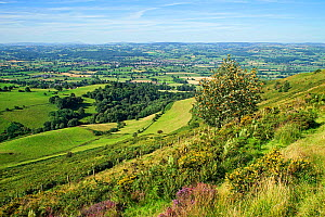 View looking west across the Vale of Clwyd from the Offa's Dyke path leading to the summit of Moel Famau in the Clwydian Mountain Range with the town of Ruthin in the center, North Wales, UK, August.  -  Alan  Williams