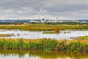 View across RSPB Burton nature reserve with the industrial areas of Connah's Quay in the background, Cheshire, UK, August.  -  Alan  Williams