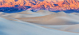 Mesquite Flat Sand Dunes in afternoon light, Death Valley National Park,California, USA, January 2017.  -  Jack Dykinga