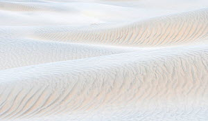 Mesquite Dunes with ripples,. Death Valley National Park, California, USA, January  -  Jack Dykinga