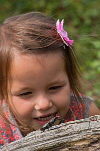 Stag Beetle (Lucanus cervus) Male being observed by young girl, Hertfordshire, England, UK, June Model released. - Andy Sands