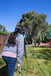 Student from Abraham Lincoln Elementary School watching Ninth Street Rookery through a telescope, Sonoma County, California, USA.  -  Suzi Eszterhas