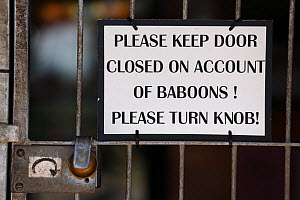 Sign 'Please keep door closed on account of Baboons' warning against Chacma baboon (Papio ursinus) South Africa - Cyril Ruoso
