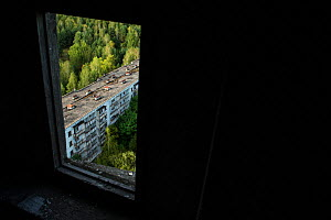 View out of a window on to Pripyat, Chernobyl Exlusion Zone, Ukraine September  -  Luke Massey