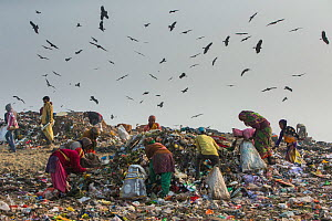 People picking through litter with Black kites (Milvus migrans) flying above, Ghazipur dump, Delhi, India  -  Luke Massey