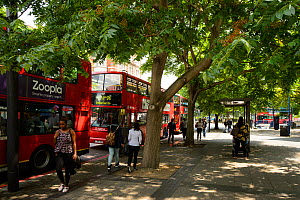 Trees providing shade for bus passengers, Elephant and Castle, London UK  -  Terry  Whittaker