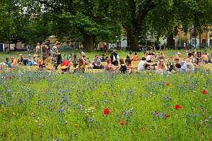 Wildflower meadow, full of native and non-native, annual and perennial wild flowers planted in an urban park, people having picnic nearby, London Fields, Hackney, London UK July - Terry  Whittaker