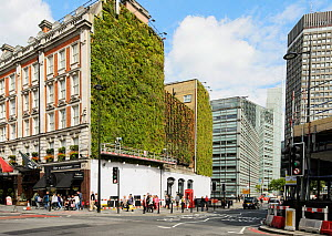Green wall, Victoria, London UK. This wall captures rainfall and releases it slowly regulating temperature and decreasing urban run off 2014  -  Terry  Whittaker