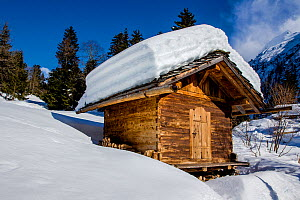 Small wooden farm chalet (mazot) covered in snow  in  winter, French Alps, Haute Savoie, France.  -  Klein & Hubert
