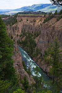 Tower Canyon Gorge near Calcite Springs, Yellowstone Nataional Park, Wyoming, USA, June 2015  -  Mike Read