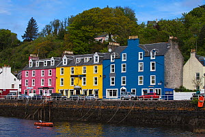 Colourful buildings on the harbour front, Tobermory, Isle of Mull, Inner Hebrides, Scotland, May 2014.  -  Mike Read
