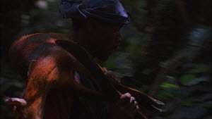 Man picking up and walking with a dead Black-fronted Duiker (Cephalophus nigrifrons) caught using a snare, Bukima, Virunga National Park, Democratic Republic of Congo, 1996.  -  Jabruson Motion