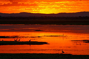 Sunset over the Sungwe Channel with Egyptian geese (Alopochen aegyptiacus) stand in silhouette, Gorongosa National Park, Mozambique.  -  Jen Guyton