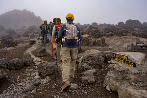 Hikers along the Machame Route, Mount Kilimanjaro, Tanzania. May 2008 - Jen Guyton