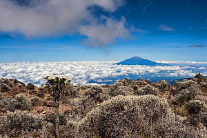 Mount Meru as seen from Mount Kilimanjaro, Tanzania. May 2008 - Jen Guyton