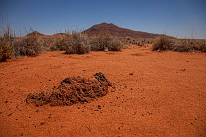 Lump of hardened earth criss-crossed with tiny tunnels showing the presence of a termite nest inside a fairy circle in the Namib Desert, Namibia.  February 2015  -  Jen Guyton