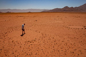 Researcher stands in a fairy circle in the Namib Desert, Namibia. These patterns have recently found that these patterns are caused by a mixture of termites, combined with the action of grasses comple...  -  Jen Guyton
