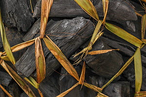 Bundle of charcoal tied up with grass in northern Mozambique.  -  Jen Guyton