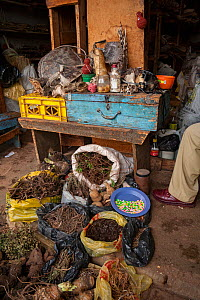 Marketplace in Mbabane selling animal body parts including sea star, the shell of a sea turtle, a snake skin, porcupine quills, a desiccated blowfish, the skin of a hedgehog, a coral, the fur of a spo... - Jen Guyton
