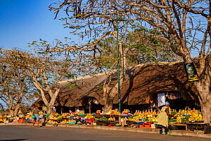 Fruit and vegetable market in St. Lucia, South Africa.  -  Jen Guyton