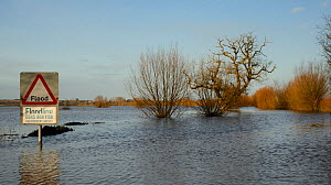 Severely flooded and closed road on Curry Moor between North Curry and East Lyng after weeks of heavy rain, Somerset Levels, UK, February 2014. - Nick Upton