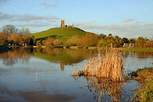 Swollen river banks at confluence of the Parrett and Tone rivers after weeks of heavy rain, with ruined St. Michael's church on Barrow Mump hill in the background, Burrowbridge, Somerset Levels, UK, F...  -  Nick Upton