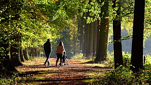 Young couple with baby buggy walking on forest path in autumn, October, Belgium. - Philippe Clement