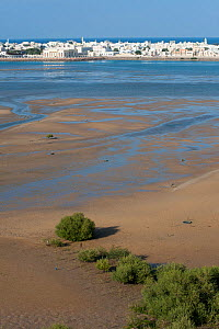 Sur, a city at the coast of Oman, with tidal mudflats and sand banks, Sultanate of Oman, February. - Martin Gabriel