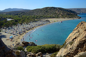 Overview of Vai beach and its Cretan Date Palm (Phoenix theophrasti) forest in peak tourism season, Lasithi, eastern Crete, Greece, July.  -  Nick Upton