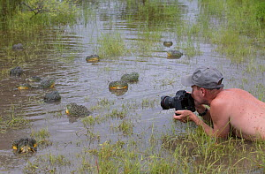 Photographer Chris Fallows taking pictures of African giant bullfrog (Pyxicephalus adspersus) Central Kalahari Game Reserve. Botswana.  -  Chris & Monique Fallows