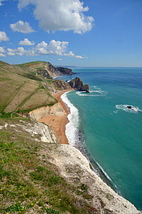 View east from the chalk cliffs of Swyre Head to Durdle Door, UNESCO World Natural Heritage Site, Jurassic coast, Dorset, UK, April. - Nick Upton