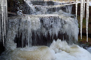 Large icicles in small forest stream, Vosges mountain, France, January.  -  Fabrice  Cahez