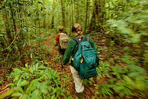 Orangutan researcher Cheryl Knott and son Russell Laman hiking through the rain forest, Gunung Palung National Park, Borneo. Model released. - Tim  Laman