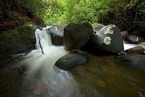 Mountain stream in the rain forest of Borneo with small waterfall, Gunung Palung National Park, Borneo.  -  Tim  Laman