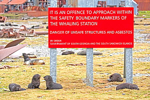Antarctic Fur Seal (Arctocephalus gazella) pups near a sign warning people to keep out of the abandoned Stromness Whaling Station, South Georgia. January. - Rick Price