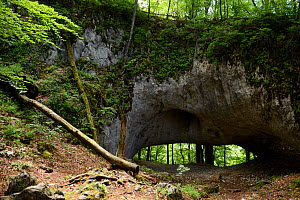 Karst Bridge, a natural limestone arch from, Cretaceous Period with Cainozoic folding located within Primeval Beech Forest, Carpathian Biosphere Reserve, UNESCO World Heritage Site, Zakarpattia Oblast...  -  Will Watson