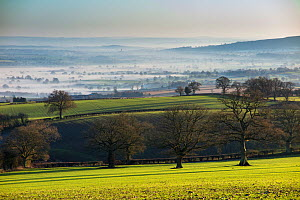 Winter's day near Ludlow, Shropshire, England, UK, December 2014.  -  David Noton