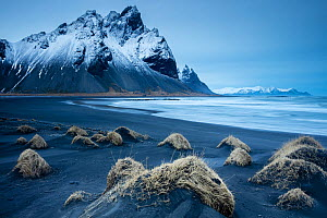 Black sand dunes on the Stokksness Peninsula, eastern Iceland, March.  -  David Noton