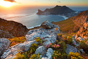 Hout Bay, from Table Mountain National Park, Western Cape, South Africa, December 2014.  -  David Noton