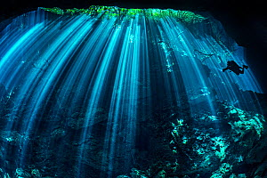 Diver  exploring a freshwater cenote (or limestone sinkhole) swimming through beams of light filtered through the forest above. Garden Of Eden Cenote, Puerto Aventuras, Quintana Roo, Yucatan, Mexico. - Alex Mustard