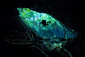 Diver  descending into a freshwater cenote (or limestone sinkhole) swimming through beams of sun light beneath forest.  Esmeralda cenote, Tamja Ha Cenote, Puerto Aventuras, Quintana Roo, Yucatan, Mexi...  -  Alex Mustard