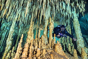 Diver swims between impressive speleothem formations, including stalagmites and stalactites, in a freshwater Cenote (or limestone sinkhole). Dream Gate Cenote, Tulum, Quintana Roo, Yucatan, Mexico.  -  Alex Mustard