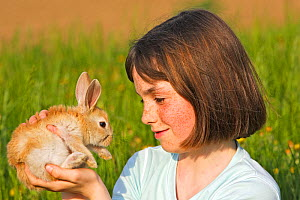 Young girl with domestic rabbit kit, Alsace, France Model released. - Sylvain Cordier