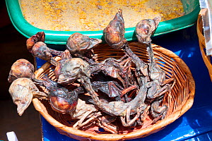 """Llama foetuses for sale in a La Paz market, Bolivia. December 2016. The """"Witches' Market"""" stalls of La Paz are run by local witch doctors. Llama foetuses are believed to be good luck and are sometimes...  -  Mark Taylor"""
