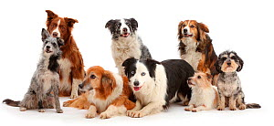 Eight assorted domestic dog mutts. - Mark Taylor
