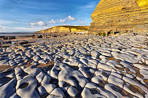 RF - Carboniferous limestone pavement and cliff showing sedementary Jurassic sandstone bedding planes. Dunraven Bay, Glamorgan, UK. January 2017. (This image may be licensed either as rights managed o...  -  Chris Mattison